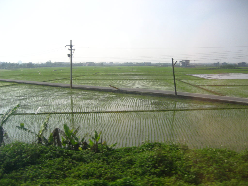 Rice fields (photo taken through a train window)