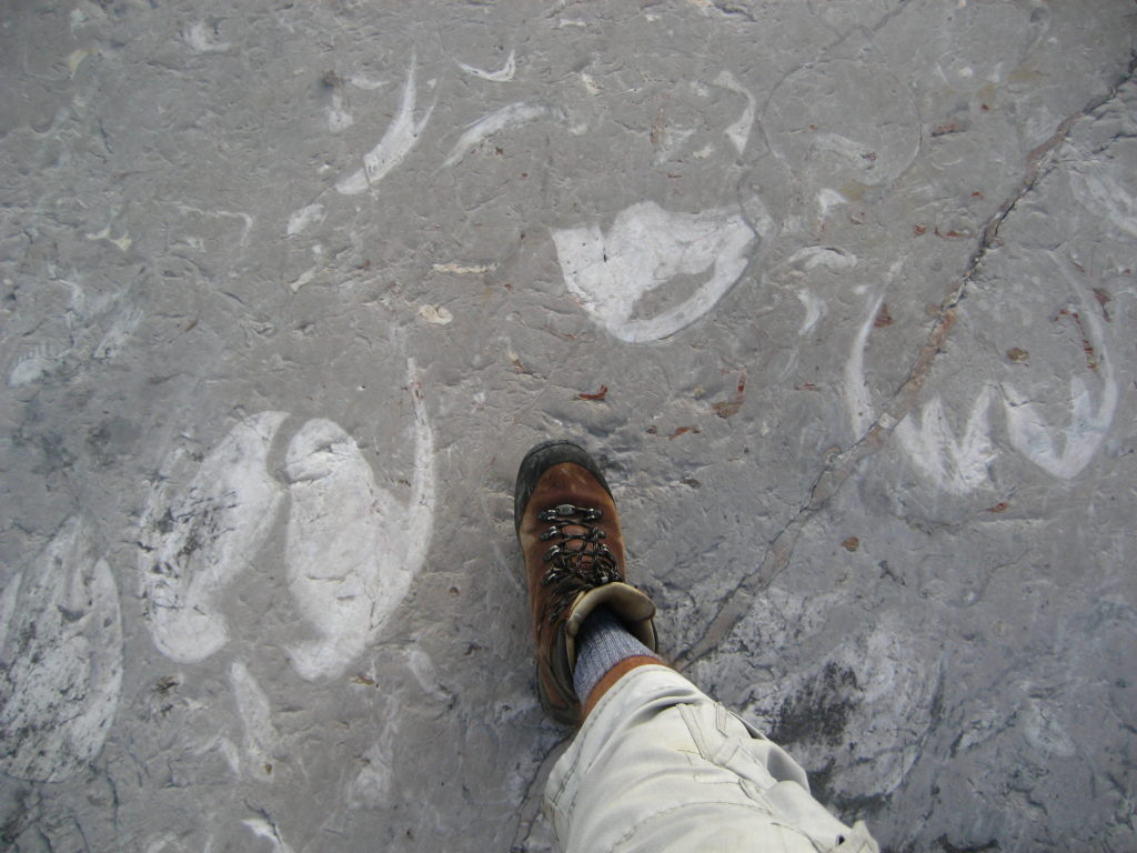 Fossils at Gosaugletscher